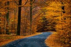 Estrada na floresta dourada bonita da faia durante o outono Fotos de Stock