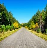 Estrada na floresta dourada do outono Foto de Stock