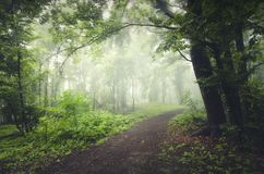 Estrada na floresta enevoada encantado Imagens de Stock Royalty Free