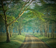 A estrada na floresta misteriosa Fotos de Stock Royalty Free