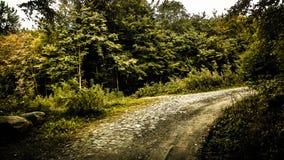 Estrada na floresta, natureza polonesa fotografia de stock