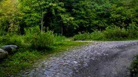 Estrada na floresta, natureza polonesa imagem de stock royalty free