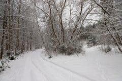 Estrada na floresta nevado fotos de stock