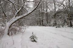 Estrada na floresta nevado fotografia de stock royalty free
