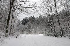 Estrada na floresta nevado fotos de stock royalty free