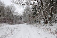 Estrada na floresta nevado imagem de stock