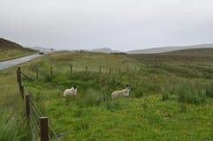 Estrada na ilha de Skye, Escócia Foto de Stock
