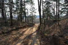 Estrada na madeira Imagem de Stock