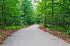 A estrada na madeira imagens de stock royalty free