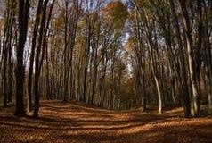 Estrada na madeira Imagens de Stock Royalty Free