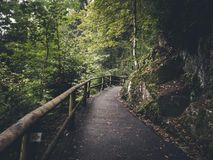 Estrada na madeira Foto de Stock