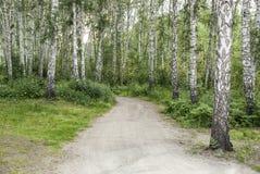 A estrada na madeira Fotos de Stock