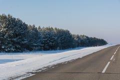 A estrada na madeira Fotos de Stock Royalty Free