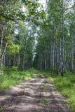A estrada na madeira Foto de Stock Royalty Free