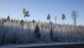 A estrada na madeira do inverno no dia ensolarado gelado imagem de stock royalty free