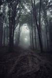 A estrada na obscuridade assombrou a floresta surreal com névoa na noite Foto de Stock