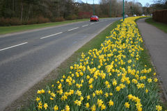 Estrada na primavera fotos de stock