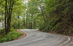 Estrada na selva Fotografia de Stock Royalty Free
