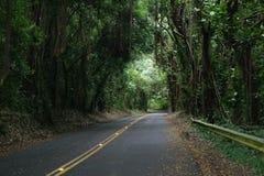 Estrada na selva foto de stock