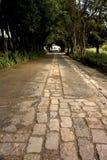 Estrada nas madeiras Foto de Stock