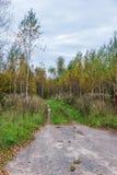 A estrada nas madeiras Imagens de Stock