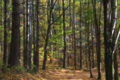 Estrada nas madeiras Foto de Stock Royalty Free