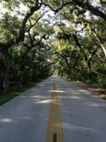 Estrada nas madeiras em Tomoka State Park em Florida Foto de Stock