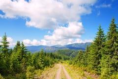 Estrada nas montanhas com pinheiros Imagens de Stock Royalty Free