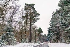 Estrada nas montanhas de Vosges no inverno Departamento de Bas-Rhin de França Imagens de Stock Royalty Free