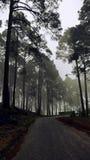 Estrada nas nuvens Imagem de Stock