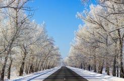 Estrada nevado bonita do inverno na floresta no dia ensolarado Imagens de Stock Royalty Free