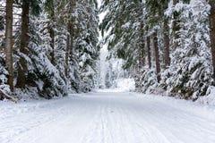 Estrada nevado em uma floresta foto de stock