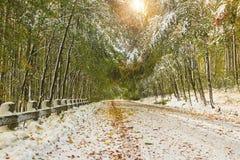 Estrada nevado na floresta Fotos de Stock