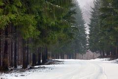 Estrada nevado na floresta Imagem de Stock Royalty Free
