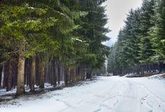 Estrada nevado na floresta Fotografia de Stock Royalty Free