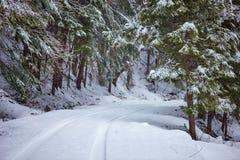 Estrada nevado na floresta Imagens de Stock Royalty Free