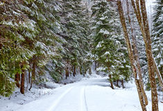 Estrada nevado na floresta Foto de Stock Royalty Free