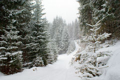 Estrada nevado na floresta conífera na queda de neve Imagens de Stock Royalty Free
