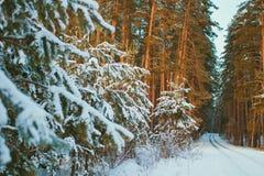 Estrada nevado na floresta do pinho do inverno foto de stock