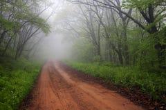 Estrada nevoenta através da floresta Fotografia de Stock