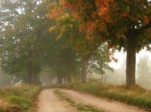 Estrada nevoenta do outono fotografia de stock royalty free