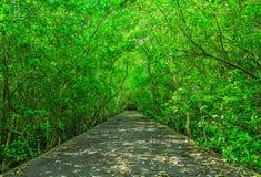 A estrada no assoalho da floresta, Imagem de Stock