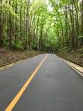 Estrada no bosque de woods Imagens de Stock Royalty Free