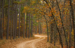 Estrada no bosque de woods imagens de stock