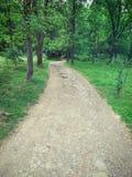 Estrada no bosque de woods Foto de Stock