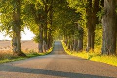 Estrada no campo com árvores verdes e um monte Fotografia de Stock
