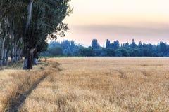 Estrada no campo com trigo imagem de stock royalty free