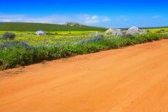 Estrada no campo de flor Imagens de Stock Royalty Free