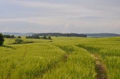 Estrada no campo de trigo Imagens de Stock