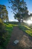 Estrada no campo durante o por do sol fotografia de stock